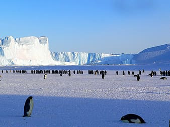 Group of penguins surrounded with glacier