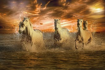 White horse running on water during sunset