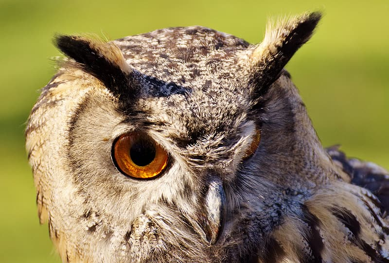 White and black owl in close up photography