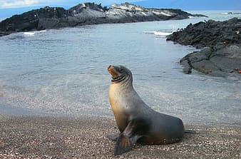 Sea lion on beach shore