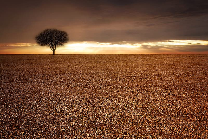 Lone tree in middle of nowhere