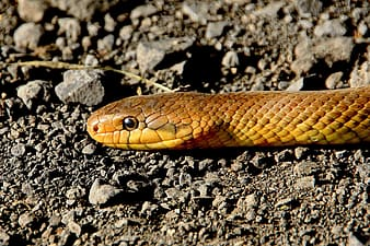 Low-angle view of yellow snake on ground