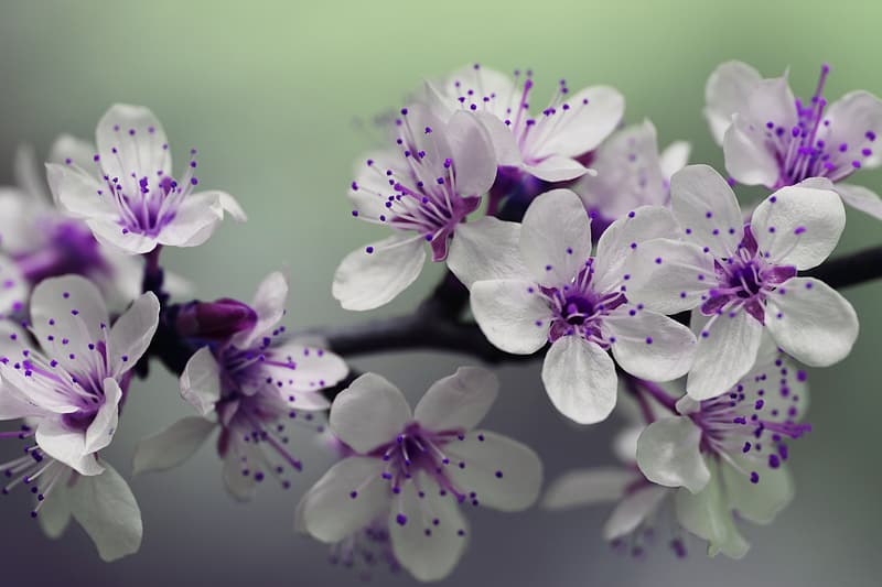 White and purple petaled flower plant