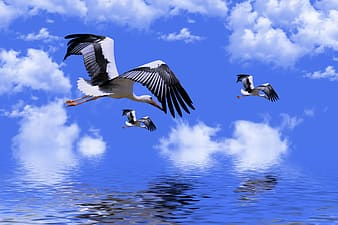 birds, stork, animals, plumage, storks, wings, feathers, flying, nature, sky