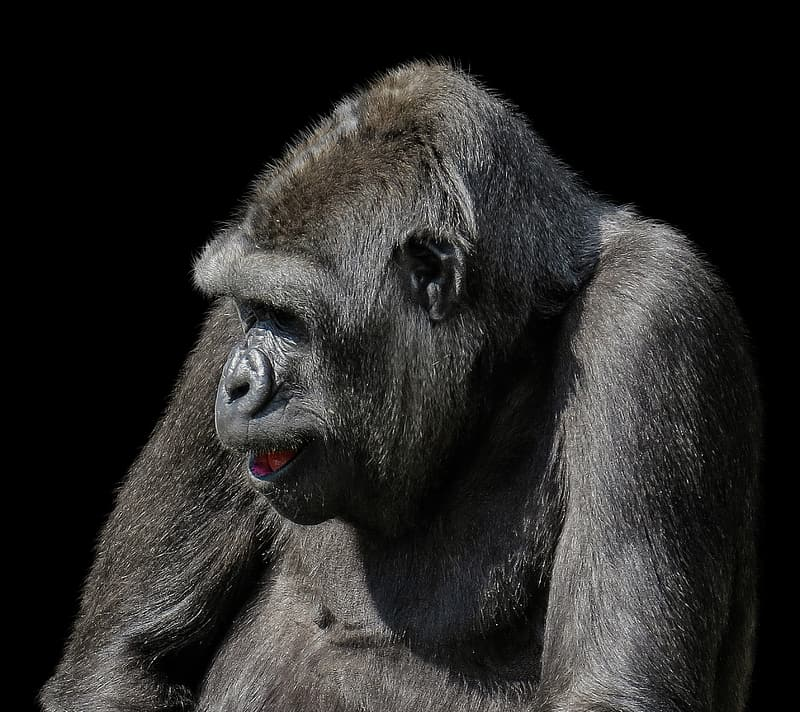 Wild life photography of primate