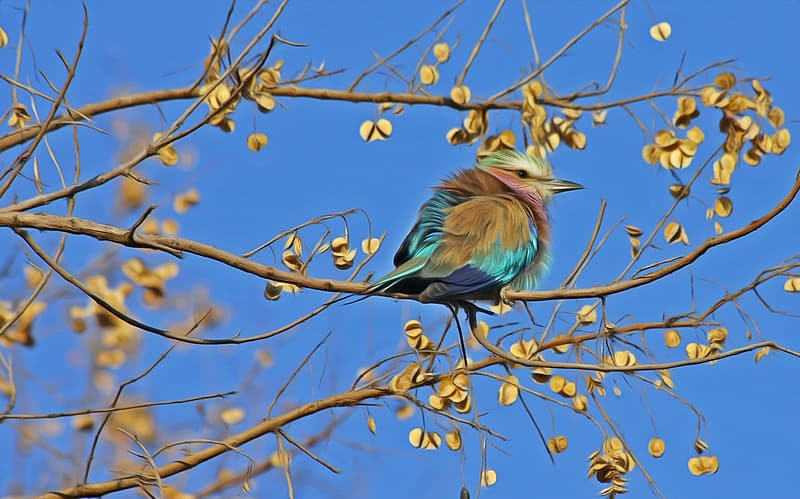 Green, blue, and teal bird on tree trunk