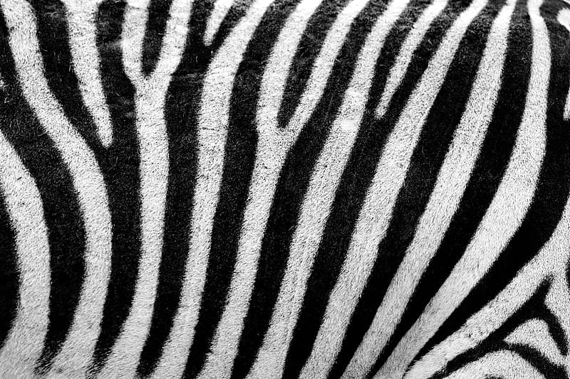 White and black zebra pattern textile