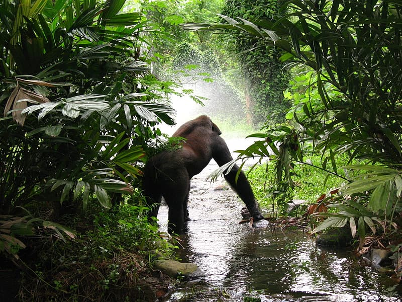 Gorilla on body of water besides green leaf plant at daytime