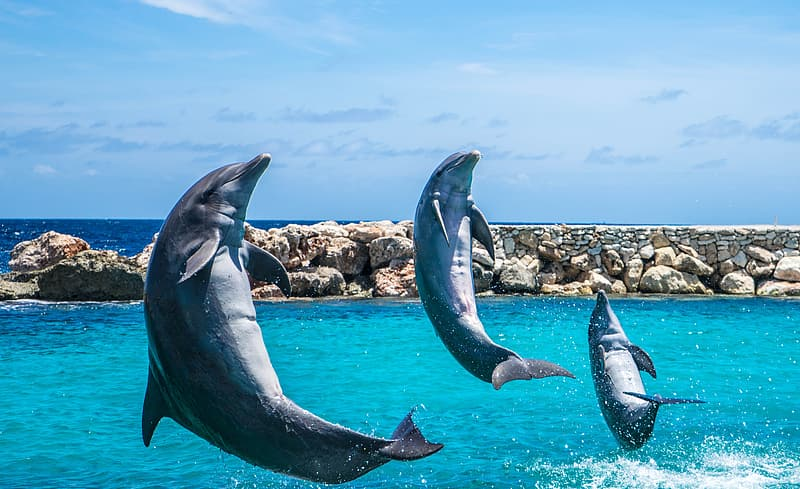 Three gray dolphins flying above sea at daytime