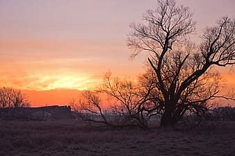 Bare trees on brown grass field during sunset