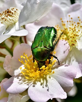 Green beetle perched on white and purple flower in close up photography during daytime
