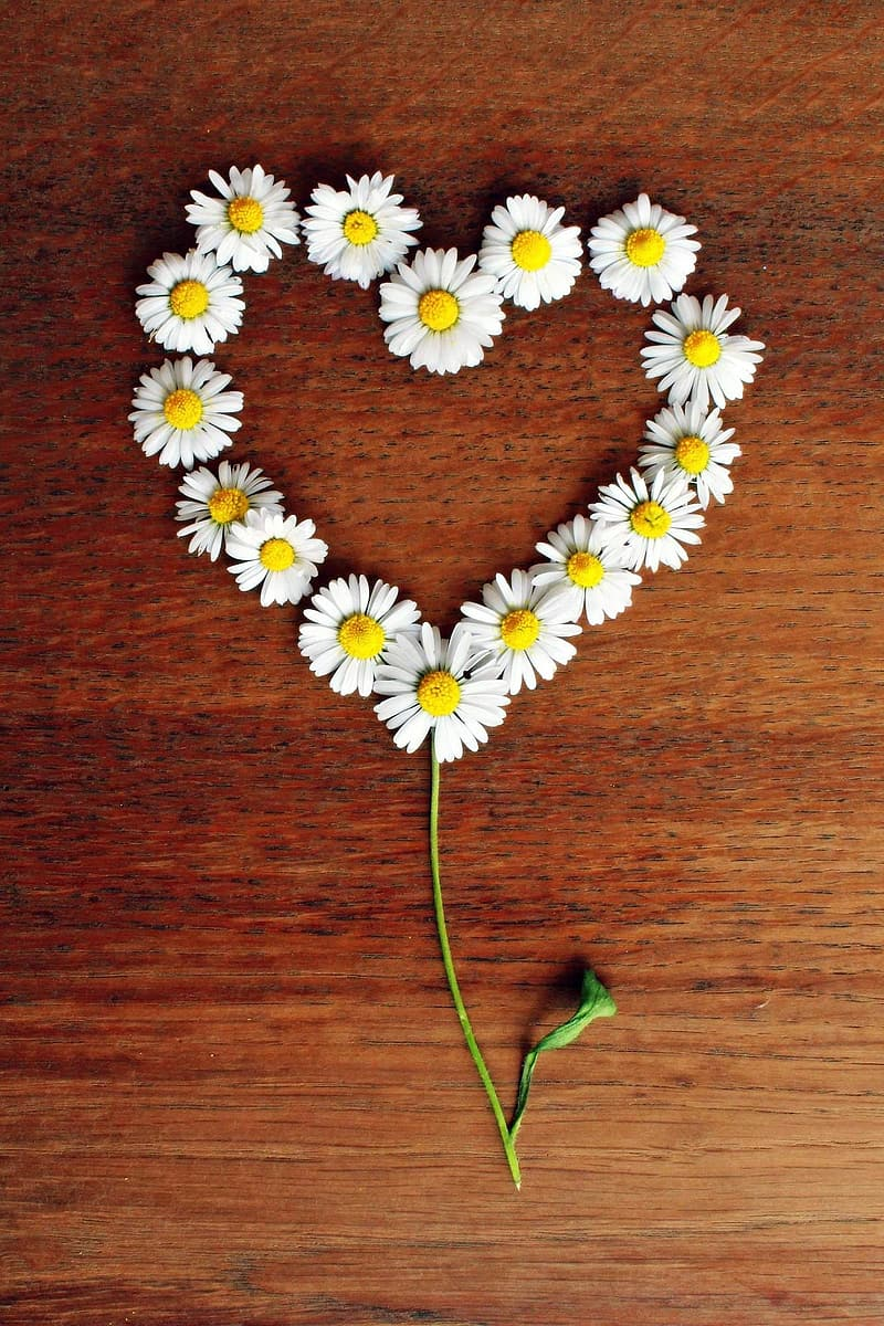 White Daisy flowers in heart-shape decor on brown wooden surface