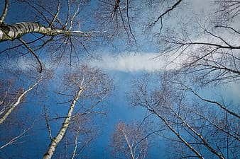Bare trees during daytime
