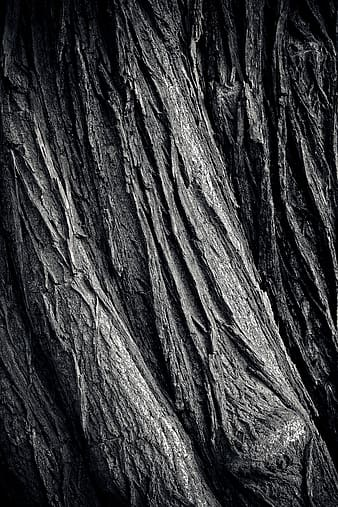 Grey and black tree trunk