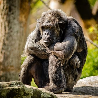 Selective focus of primate animal