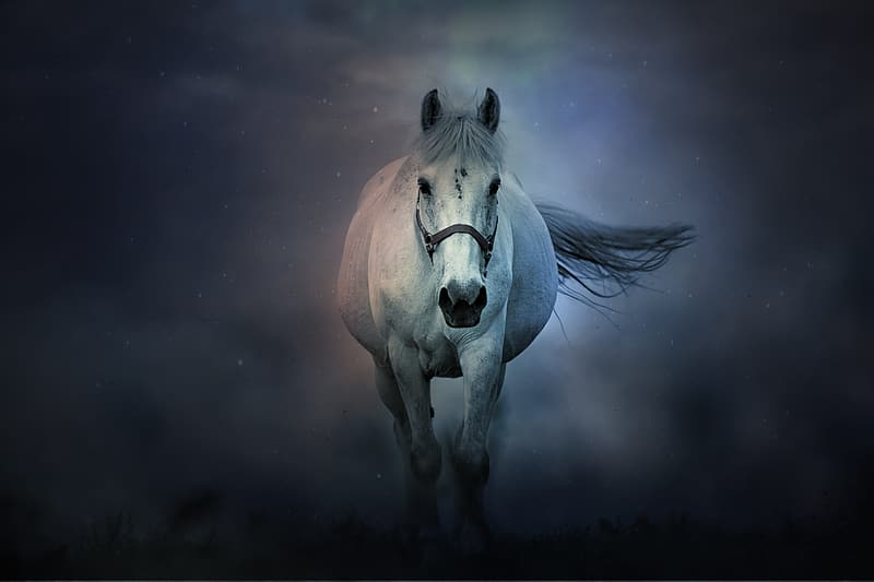 Brown horse in black and white background