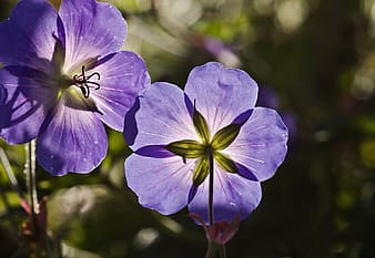 Closeup photo of purple petaled flowers at daytime