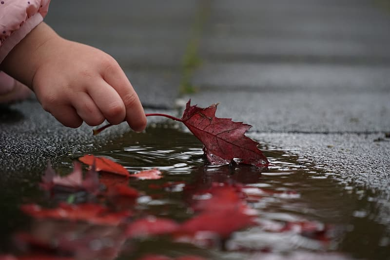 Toddler's holding brown maple leaf on body of water