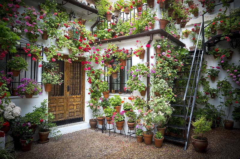 Photography of house with flowers