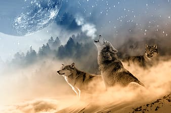 Three wolves on snow howling in night during full moon