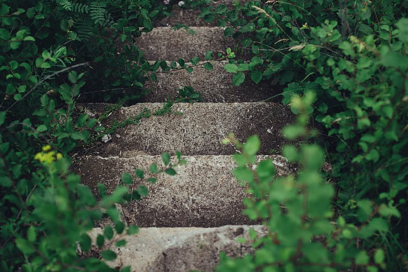 Green plants on brown concrete stairs