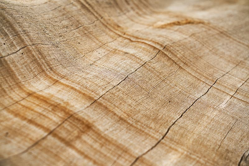 Untitled, tree, texture, shell, macro, detail, brown, timber, pattern, wood-fibre boards