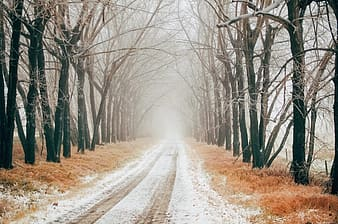 Road between bare trees