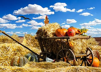 Squash and hay on cart