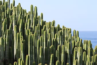 Photo of cacti near body of water on sunny day