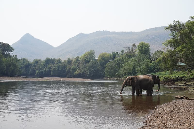 Elephat on river