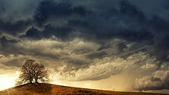 Leafless tree on brown field under cloudy sky