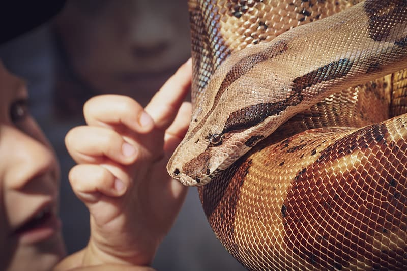 Brown and black snake on persons hand