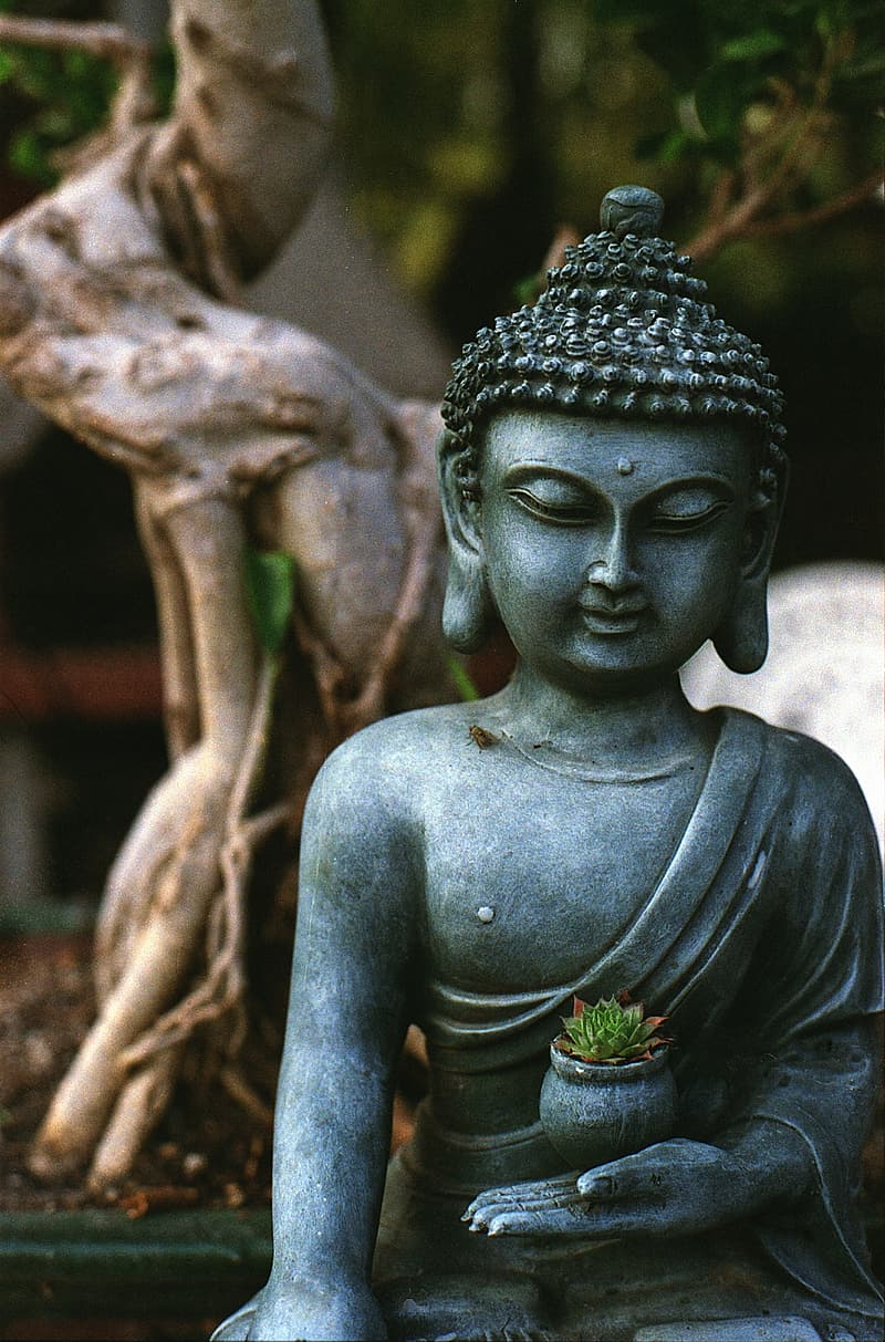 Gray Buddha figurine holding green plant with pot photo