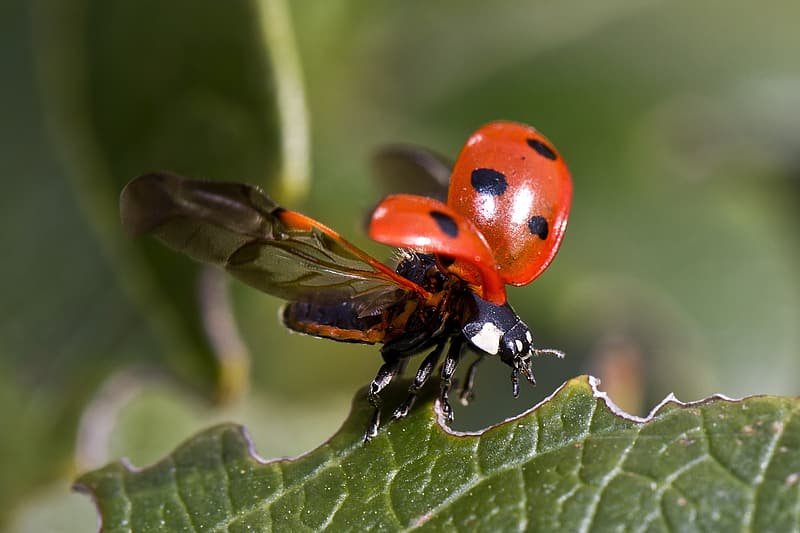 Red and black ladybug during daytime