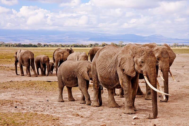 Gray elephants under white clouds during daytime