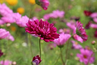 Purple petaled flower