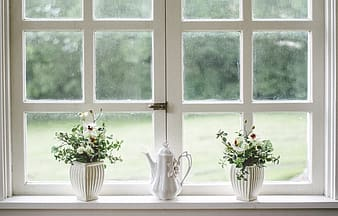 White wooden framed glass window with plants