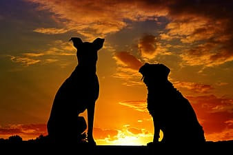 Silhouette of two dogs during golden hour