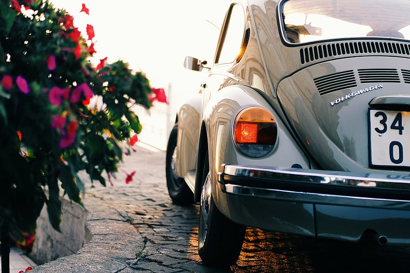 Gray Volkswagen Beetle coupe parked beside purple petaled flowers at daytime