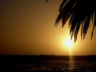 Silhouette photography of coconut tree near body of water