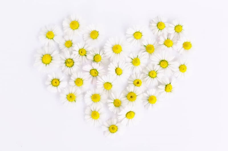 White-and-yellow daisies forming heart