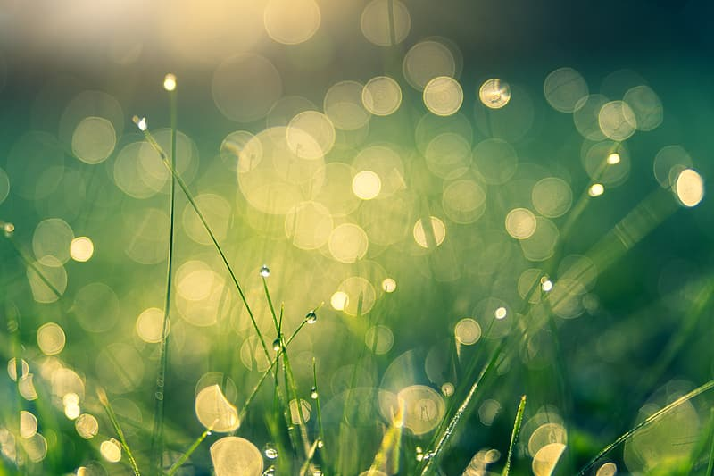 Water droplets on green grass during daytime