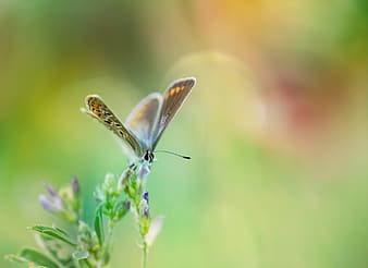 Selective photo of summer azure butterfly