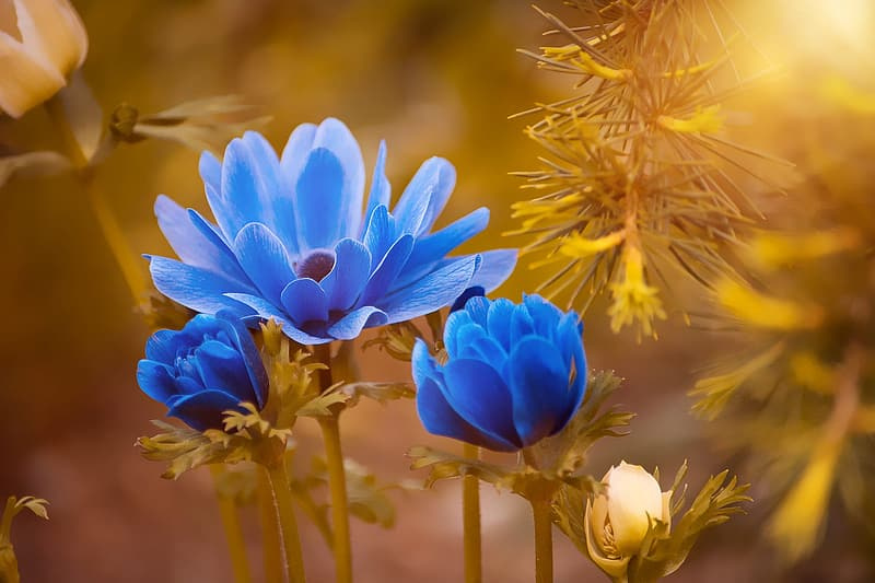 Blue and white petaled flowers