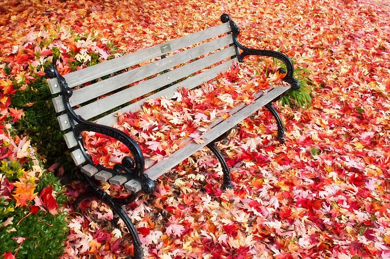 Black wrought iron gray wooden bench with red maple leaves