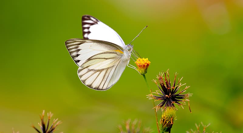 White and black butterfly perched on yellow petaled flower selective focus photography