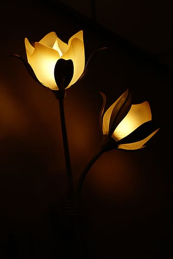 Two yellow lighted flower lamps