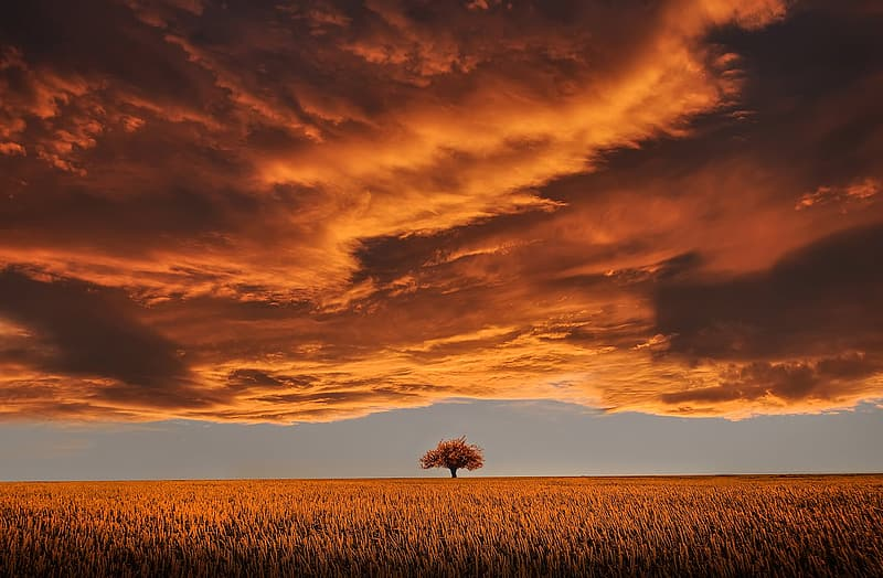 Brown tree in the middle of the field during golden hour