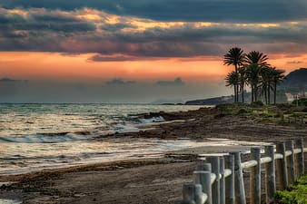 Beach shore with palm trees during sunset