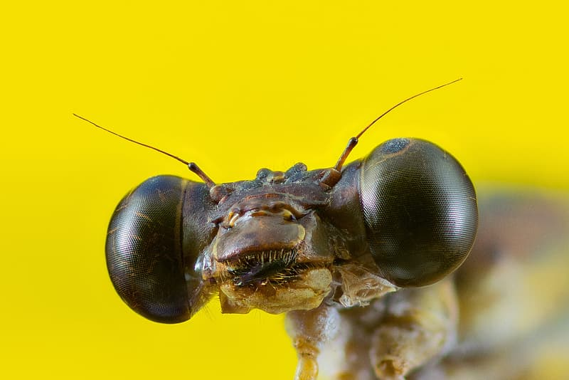 Selective focus photography of black and brown insect